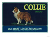 Collie Lemon Label - San Dimas, CA Prints by  Lantern Press