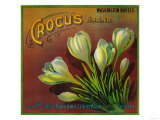 Crocus Orange Label - Highland, CA Prints by  Lantern Press