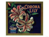 Corona Lily Orange Label - Corona, CA Prints by  Lantern Press