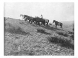 Lone Cowboy with Stray Horses Photograph - Texas Art
