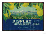 Display Lemon Label - Ventura, CA Prints by  Lantern Press