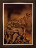 African Cheetah Prints by Gerry Ellis
