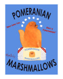 Pomeranian Marshmallows Collectable Print by Ken Bailey