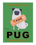 Pug Orange Juice Collectable Print by Ken Bailey