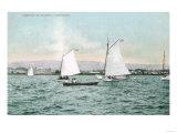 Sailboats off Alameda Beach - Alameda, CA Posters