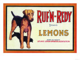 Ruf n' Redy Lemon Label - Upland, CA Posters by  Lantern Press