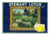 Stewart Lotus Lemon Label - Upland, CA Print