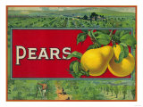 Pear Stock Crate Label Posters