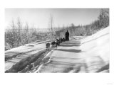 Mushing a Dog Sled in Alaska Photograph - Alaska Posters by  Lantern Press