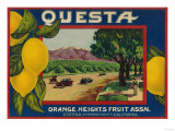 Questa Lemon Label - Corona, CA Posters by  Lantern Press