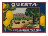 Questa Lemon Label - Corona, CA Posters