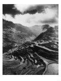 Rice Terraces in the Philippines Photograph - Philippines Print by  Lantern Press