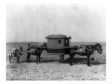 Sedan Chair Carried by Mules in China Photograph - China Posters