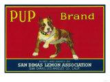 Pup Lemon Label - San Dimas, CA Posters