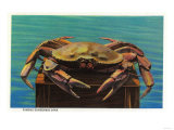 Dungeness Crab on Hood Canal - Hood Canal, WA Art by  Lantern Press