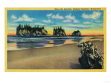 Pacific Seacoast, Olympic Peninsula - Olympic National Park Prints by  Lantern Press