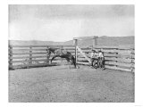 Two Cowboys Breaking a Bronco in a Corral Photograph - Texas Print