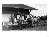 Young Men Posing on a Mule Wagon Prints