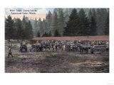 American Lake, Washington - A Mule Team at Camp Lewis Prints