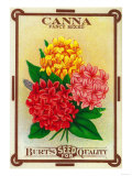Canna Seed Packet Prints by  Lantern Press
