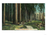Woodland Scene - Eugene, OR Prints by  Lantern Press