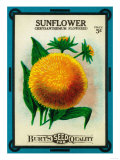 Sunflower Seed Packet Prints by  Lantern Press