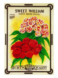 Sweet William Seed Packet Prints by  Lantern Press