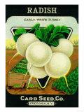 Radish Seed Packet Prints by  Lantern Press