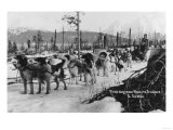 First Dog Team to go from Nome to Seward Photograph - Seward, AK Art by  Lantern Press