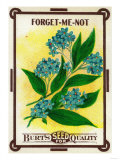 Forget Me Not Seed Packet Prints by  Lantern Press