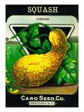 Squash Seed Packet Prints by  Lantern Press