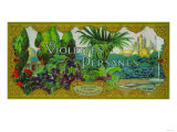 Violettes Persanes Soap Label - Paris, France Prints