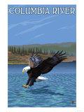Columbia River, Washington - Eagle Diving Affischer av  Lantern Press