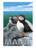 Maine - Puffins Scene Prints by  Lantern Press