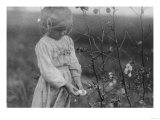 Young Black Girl Picking Cotton Photograph - Houston, TX Prints by  Lantern Press