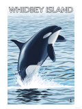 Whidbey Island, Washington - Orca Jumping Prints by  Lantern Press