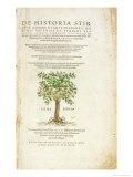 De Historia Stirpium Commentarii Insignes, by Leonard Fuchs Giclee Print by Heinrich Fullmaurer
