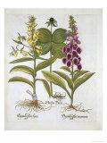 Herb Paris Giclee Print