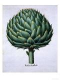 Artichoke from Hortus Eystettensis by Basil Besler Giclee Print