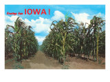 Greetings from Iowa, Corn Field Print