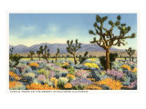 Joshua Trees in Desert, California Print