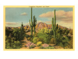 Camelback Mountain, Saguaros, Arizona Posters