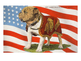 Marine Corp Boxer Dog with Flag Giclee-tryk i høj kvalitet