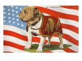 Marine Corp Boxer Dog with Flag Schilderij
