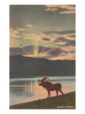 Elk at Sunset, Big Sky, Montana Print