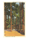 Cabin in Northern Pines, Minnesota Poster