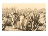 Indigènes de la plantation Maguey, Mexique Posters