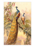 Peacock and Peahen, Illustration Giclee Print