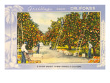 Greetings from California, Orange Grove Poster