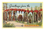 Greetings from Redwoods, California Poster